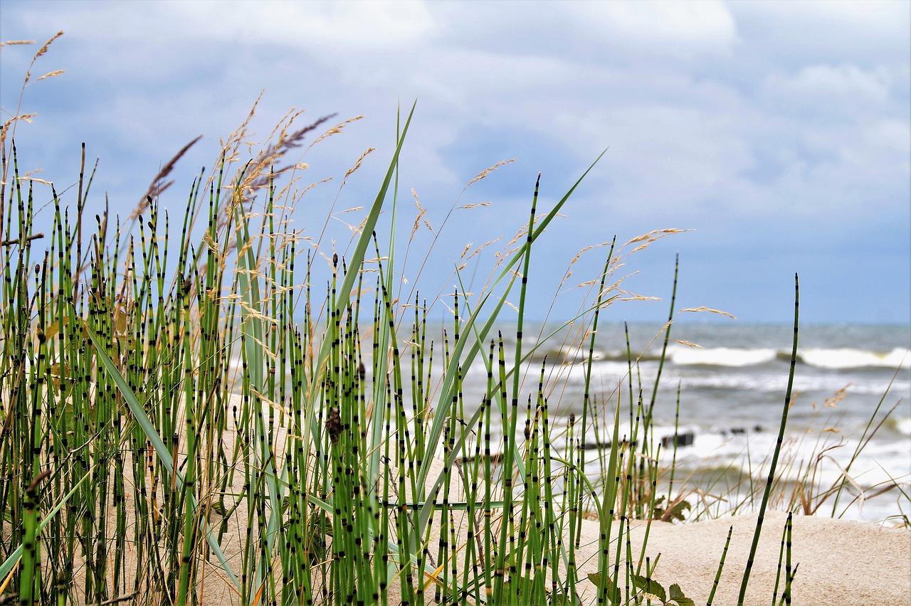 Czy warto odwiedzić Krynicę Morską? Krynica Morska domki do wynajęcia tanio