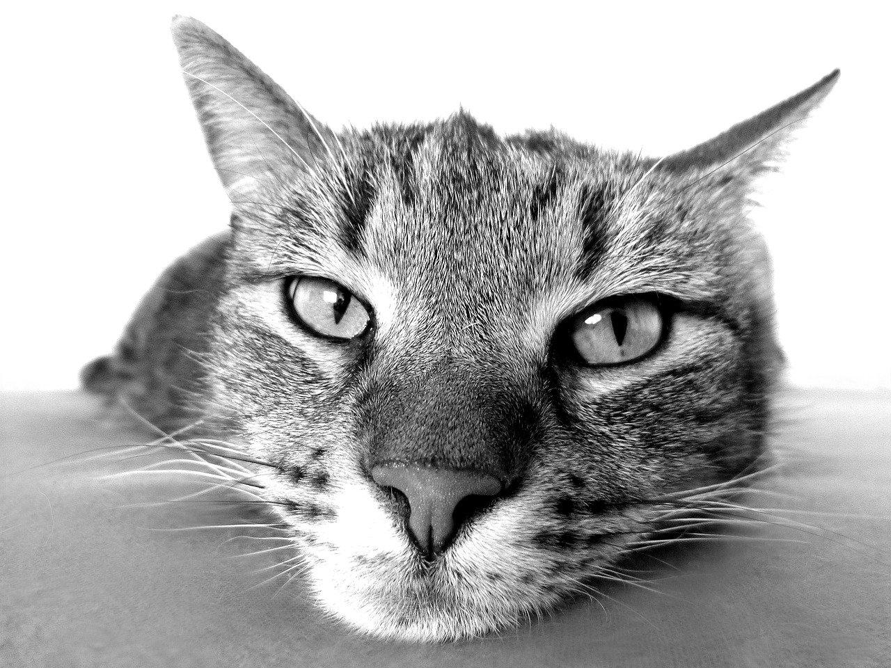 Jak dbać o skórę kota